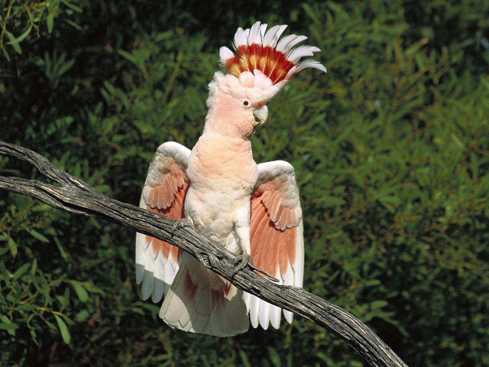 Awesome bird
