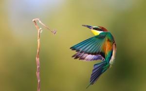 bee eater bird branch
