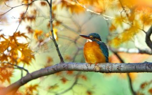 branch bird kingfisher
