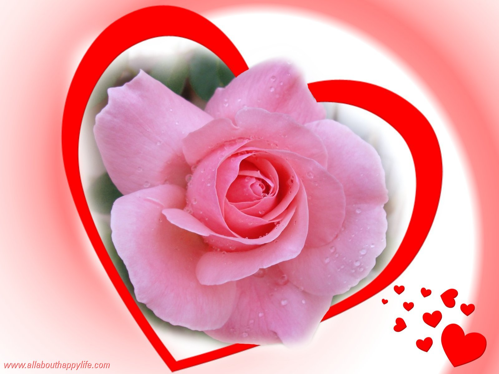 Love pink rose