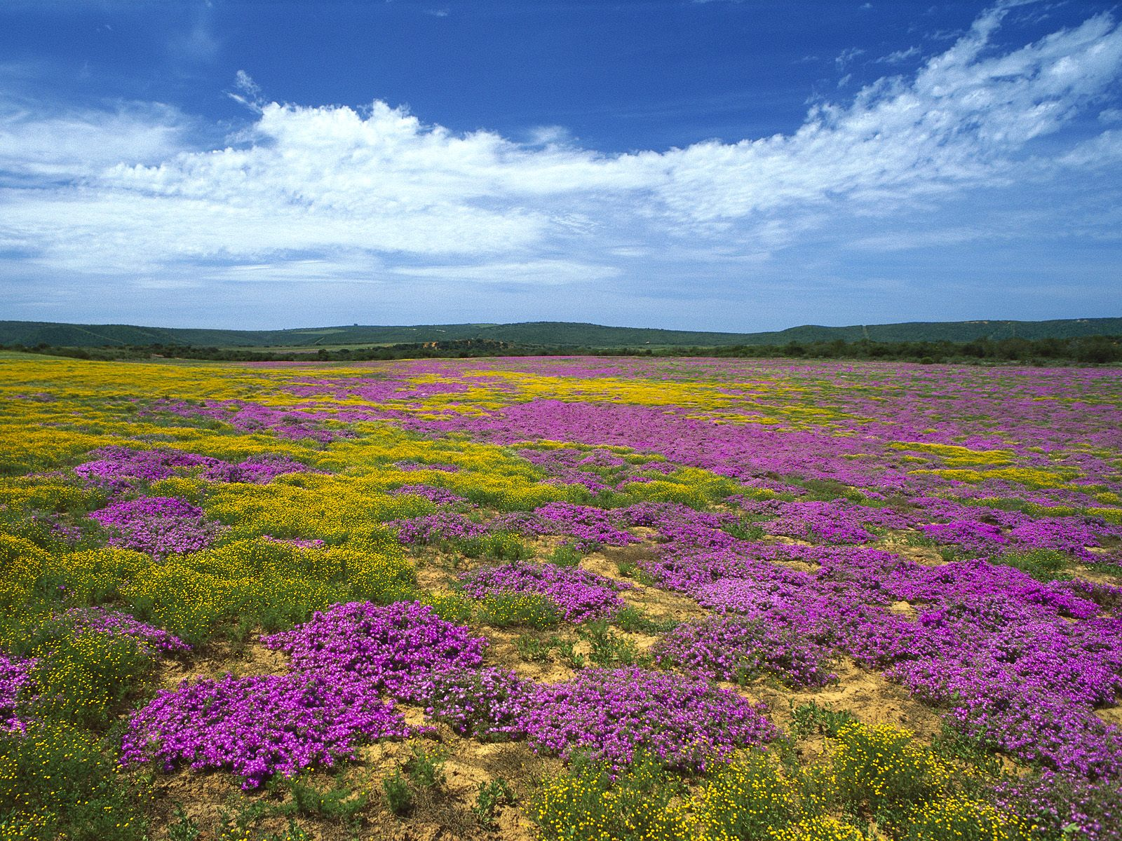 Dew Flowers, Eastern Cape, South Africa