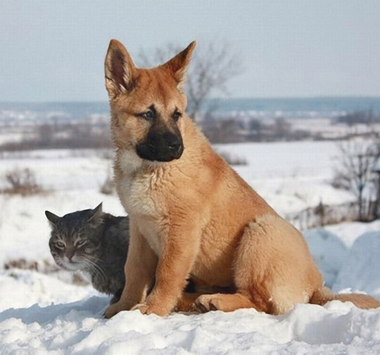 Cat And Dog 34 Wallpaper Animal Wallpapers Imgur