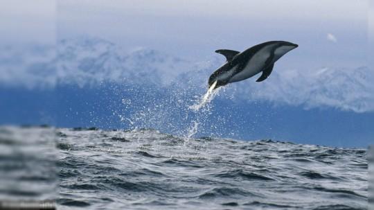 Dolphins 62 Wallpaper Animal Wallpapers Reddit