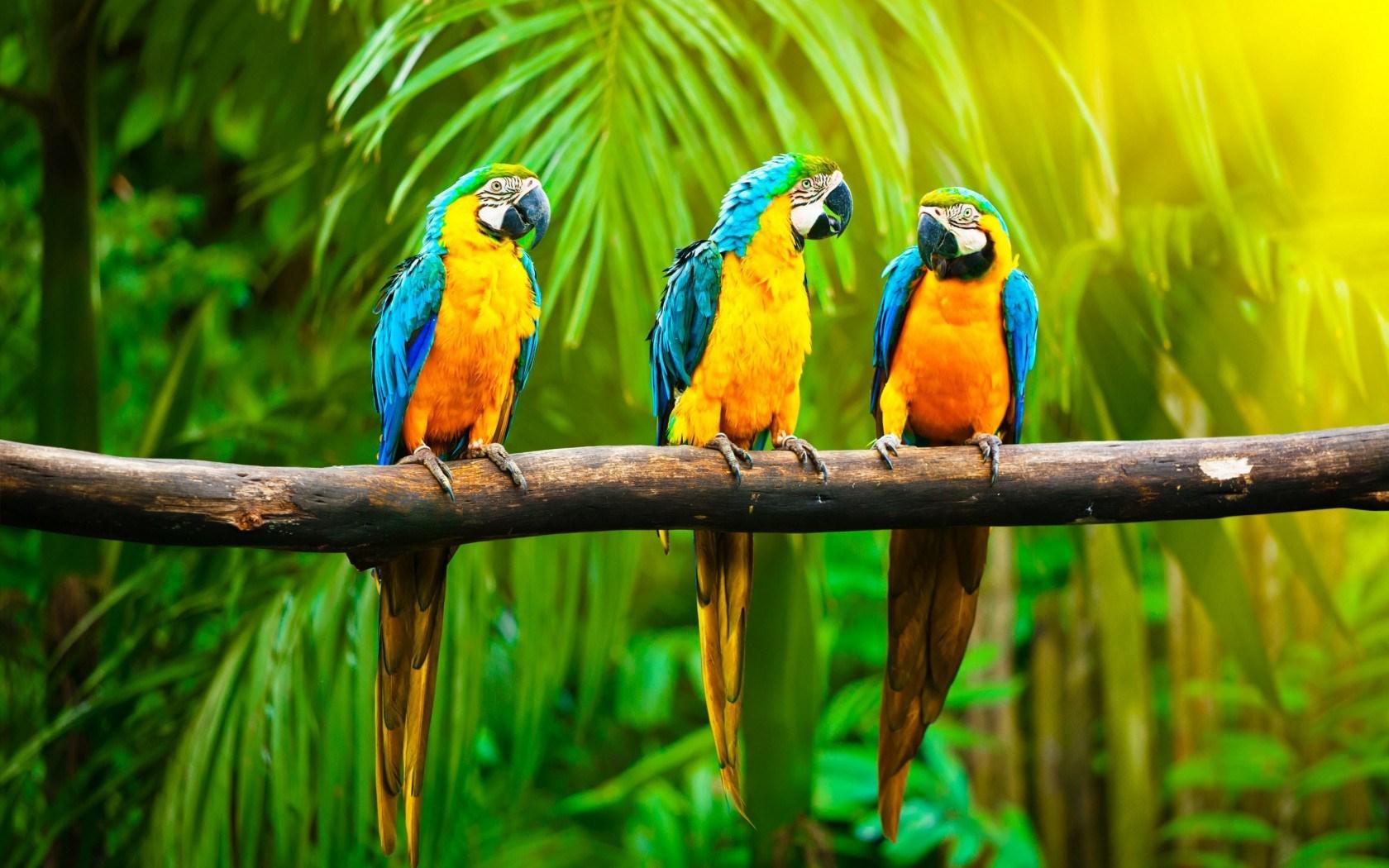Parrots branch