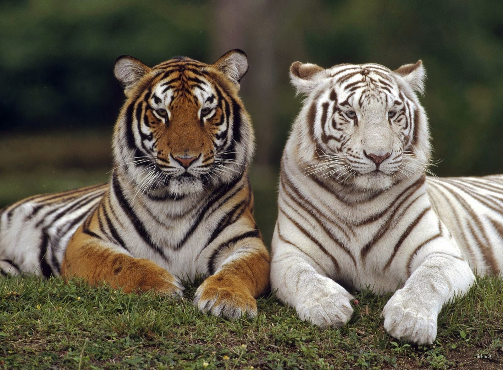 Mates wild animals