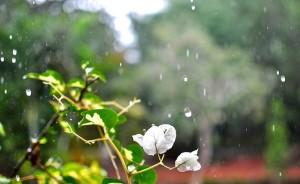 Raindrops nature