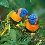 cute twin birds