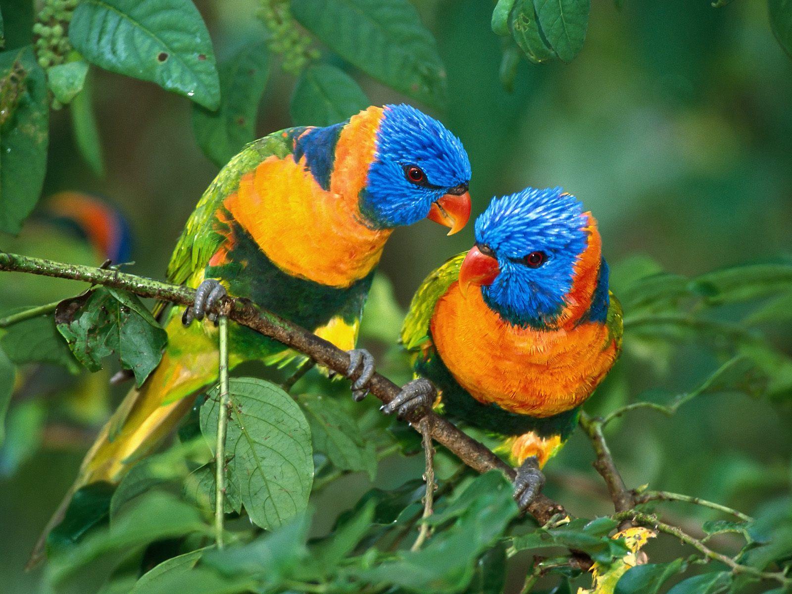 cute twin birds