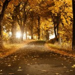 Autumn background yellow