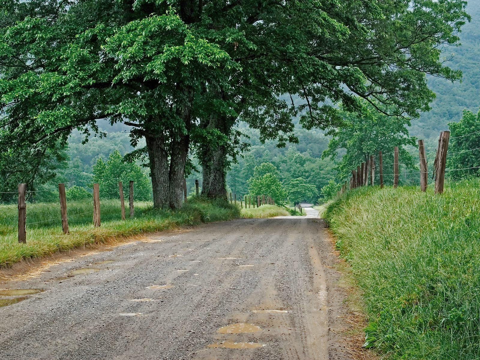 Nature HD cool road and tree