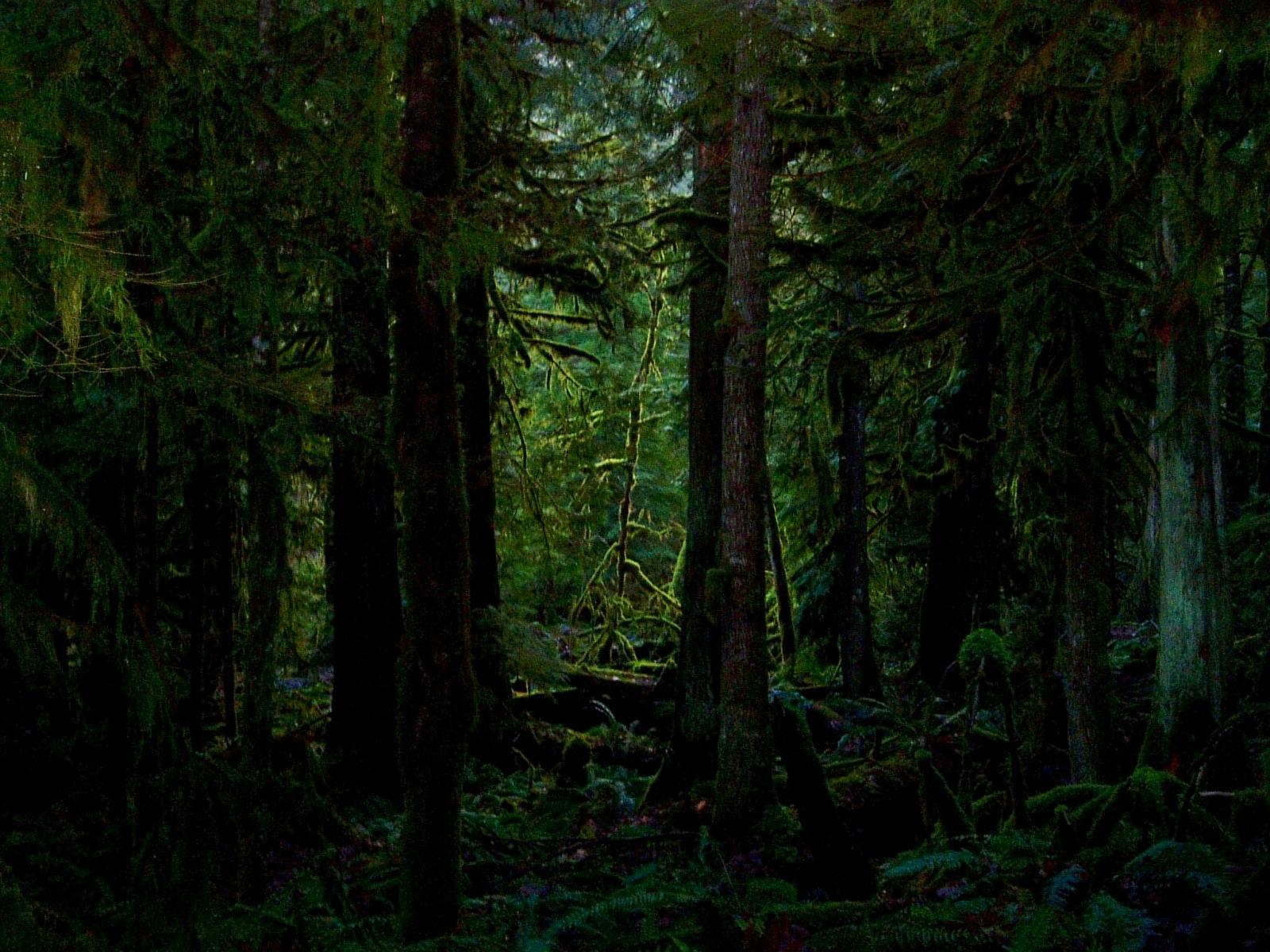 Nature HD dark