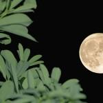 nature moon HD wallpaper